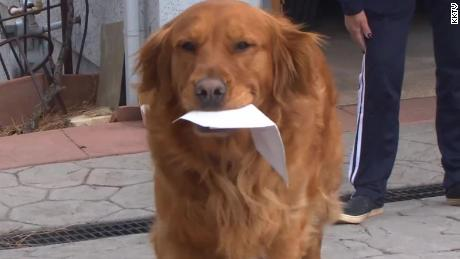 A woman trained her dog to deliver groceries to a neighbor with health problems