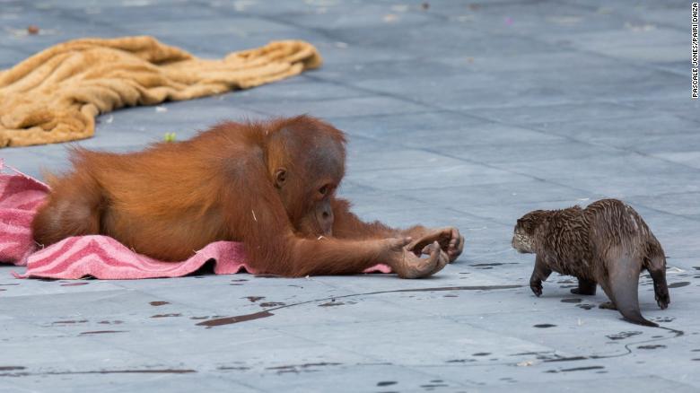 Here, otter, otter!