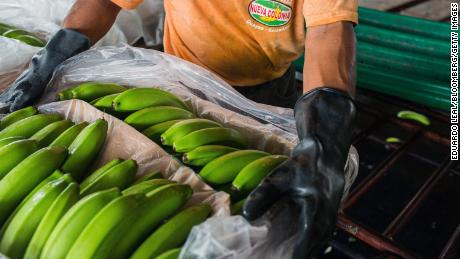 Ecuador is the largest exporter of bananas.