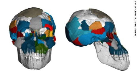 Brain imprints are shown for the  Selam toddler fossil.