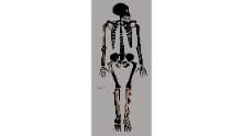 The fossils of a Homo naledi juvenile could reveal how ancient human ancestor children matured.