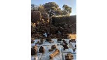Fossils recovered during an excavation at the Drimolen site are shown.