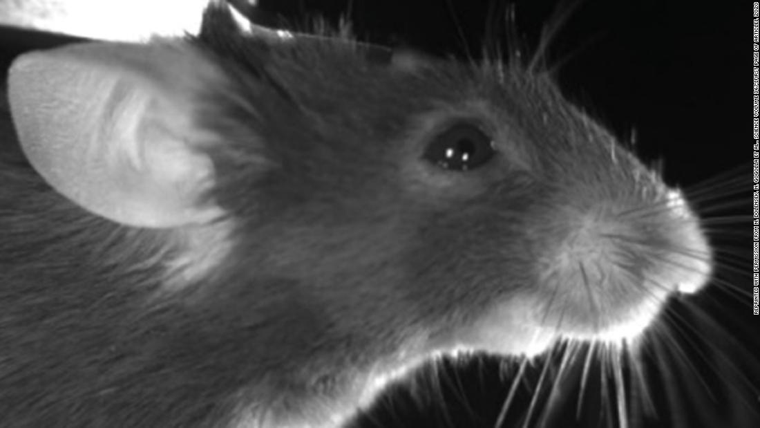 Mice make different faces depending on how they feel — and that could have big implications for us