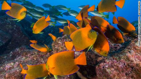 Researchers said the integrity of reef fish communities adds resilience to coral reefs and facilitates their recovery once pressures are removed.