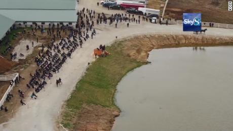 More than 600 people attended a horse auction on a property in Wayne County, Iowa, on Thursday.