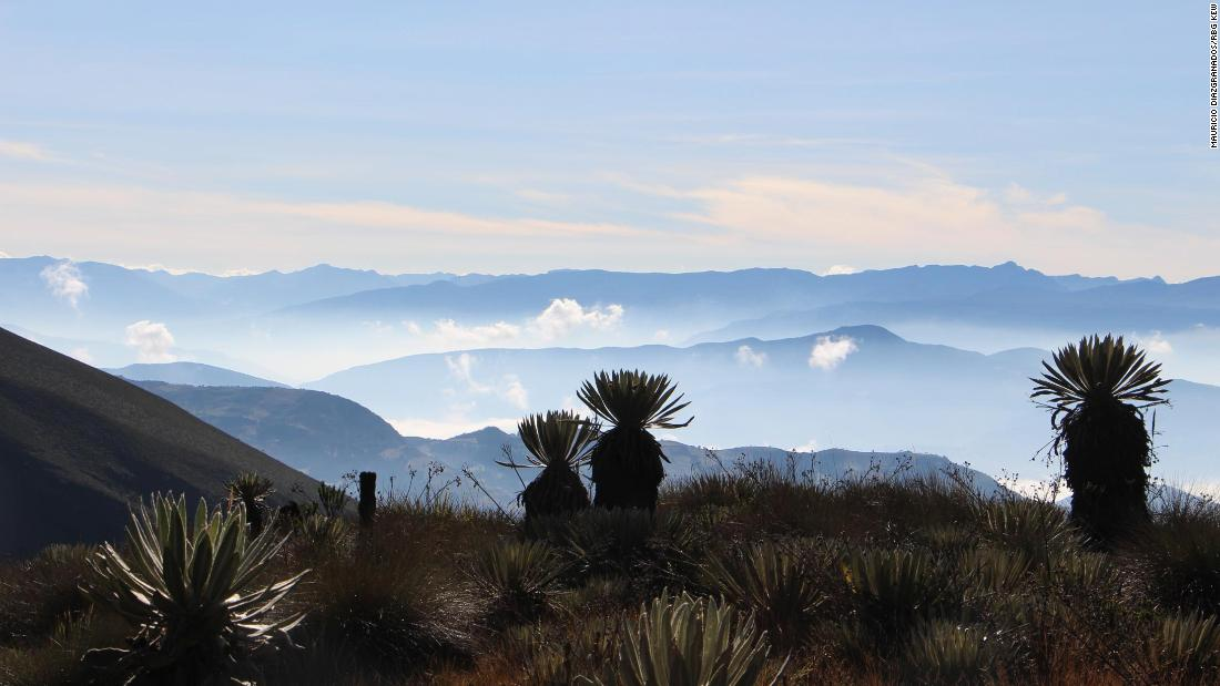 Paramo de la Rusia, Boyaca, photographed 2019. In the distance are the mountains of the Cordillera Oriental, which contain paramos still to be explored, says Diazgranados.