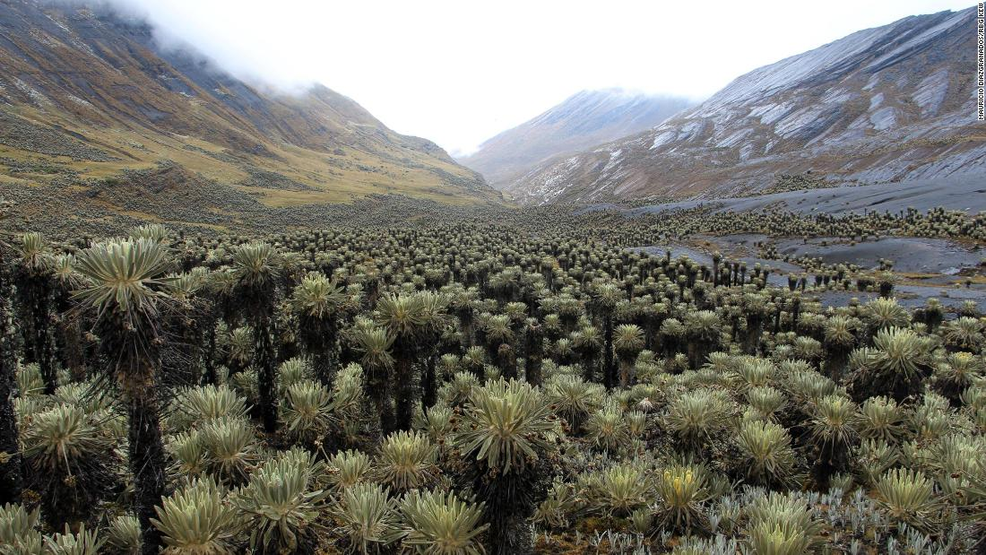 "Paramo de Chiscas, 4,400 meters (14435 feet) above sea level in Cocuy National Park, photographed 2018. ""We were the first botanists ever making scientific plant collections in this paramo,"" says Diazgranados."