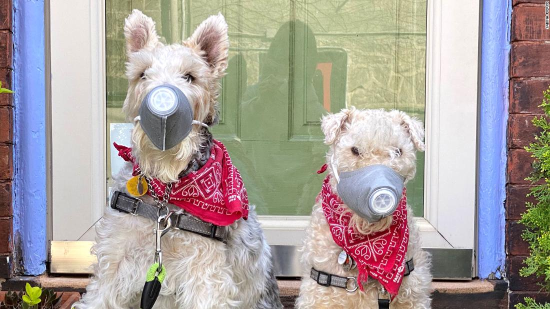 Izzie, left, and Tippi wear ventilated dog masks in Philadelphia on April 6.