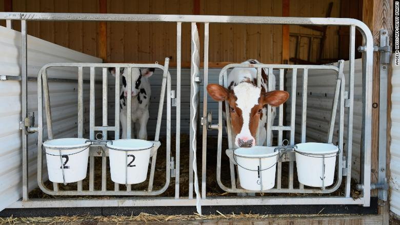 Adjusting the size of dairy herds now could lead to shortages in the future.