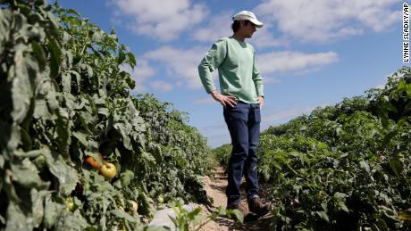 Les agriculteurs jettent de la nourriture qui pourrait aller aux banques alimentaires