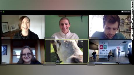 Gizmo the cow joins a video conference call.