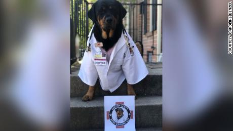 "Loki the therapy ""dogtor"" poses in front of a ""Hero Healing Kit."""