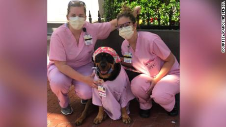 Loki in her pink scrubs at the University of Maryland Medical Center.