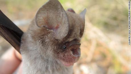 Four new species of leaf-nosed bats have just been discovered.