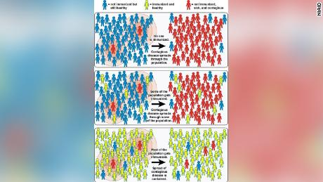 This graphic from the National Institute of Allergy and Infectious Diseases explains the concept of herd immunity.