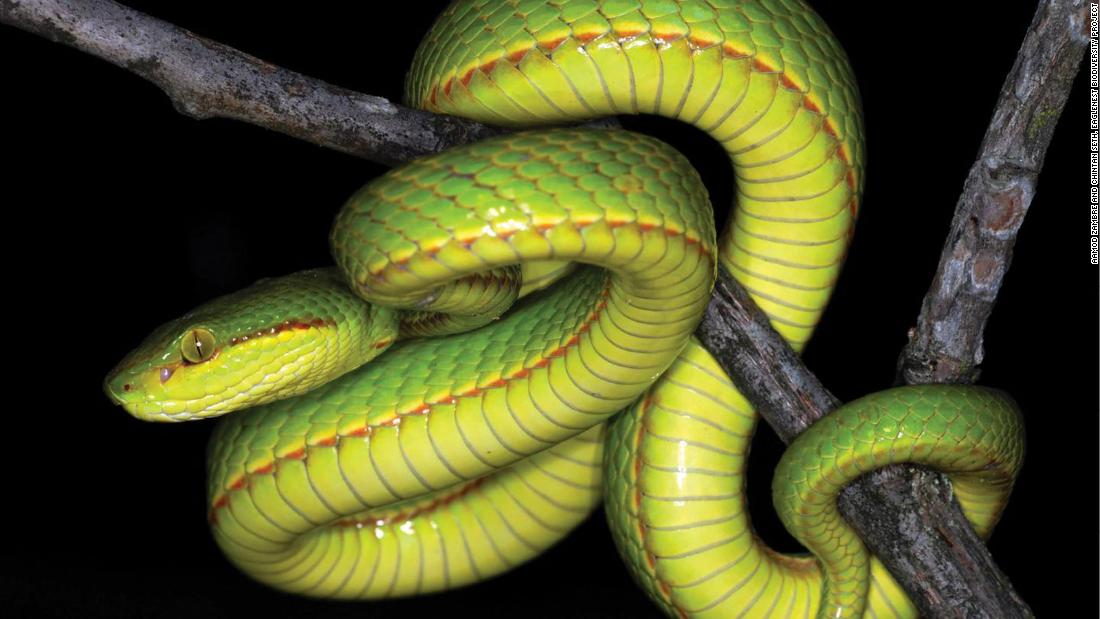 Scientists discover a new snake and name it after Salazar Slytherin - CNN
