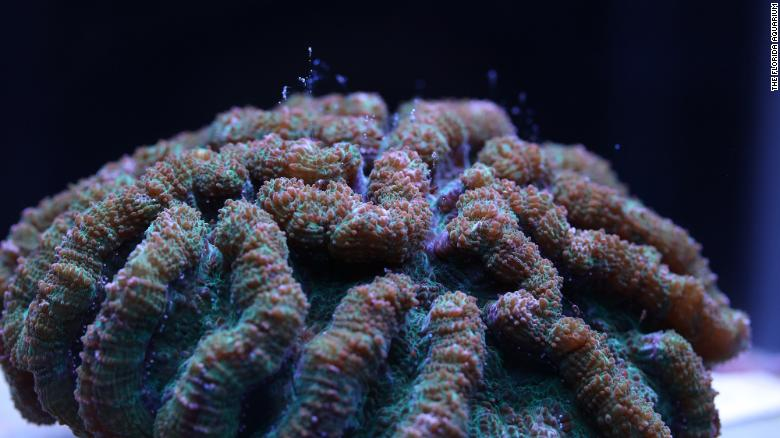 The Florida Aquarium Just Made a Breakthrough that will Help Save the Third Largest Coral Reef in the World