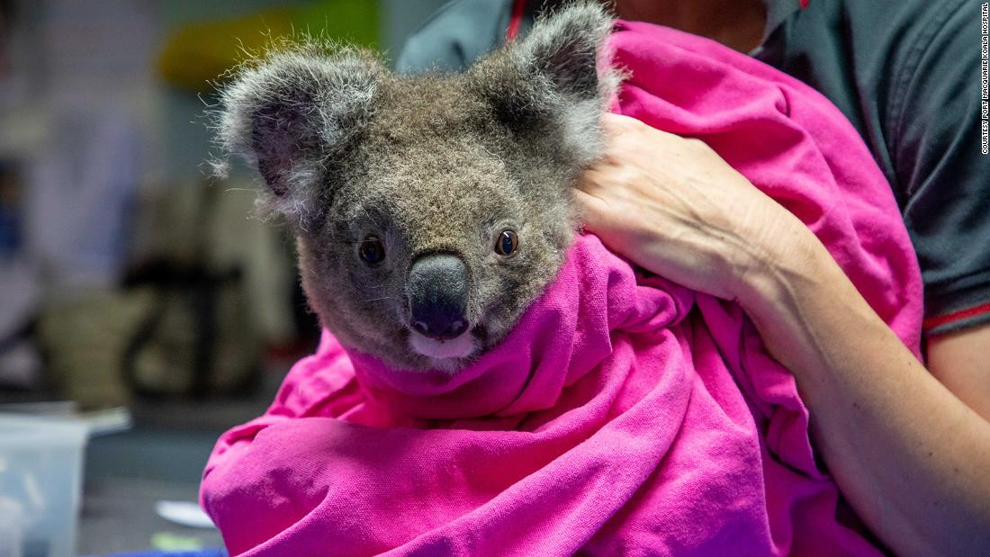 Koalas injured in Australia bushfires re-released into wild | CNN Travel