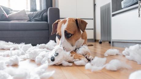 Stressed Pets: Πώς να το σταματήσετε τώρα και όταν επιστρέφετε στη δουλειά