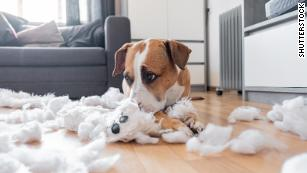 Stressed pets: How to stop it now and when you go back to work