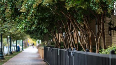 Piantare alberi potrebbe aiutare questa città a prevenire 400 morti premature