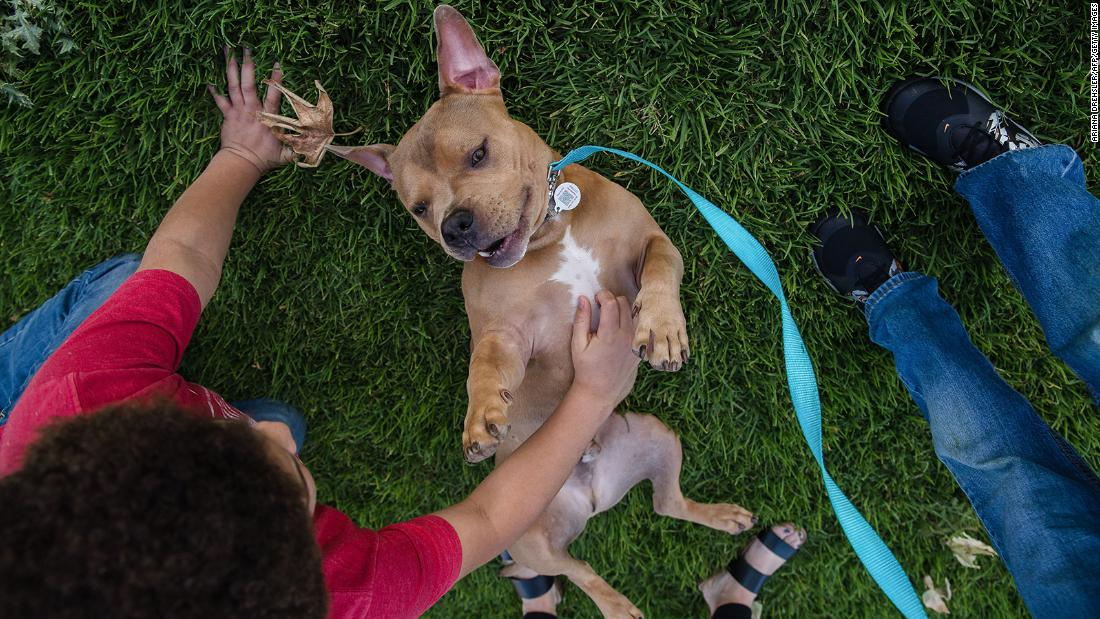 Animals shelters across the United States are emptying out thanks to the coronavirus pandemic, as people stuck at home are fostering or adopting animals. The Hillery family adopted Mase the pit bull from the San Diego Humane Society.