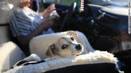 Layla the dog waits to be taken to a new foster home at the Animal Rescue of New Orleans in March, as uncertainty around coronavirus leads to fewer people adopting animals.