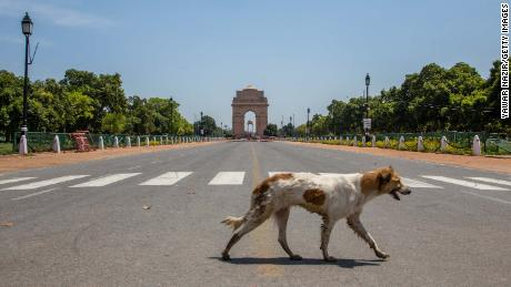 A stray dog walks in front of an empty historic India Gate on March 30, 2020 in New Delhi, India.