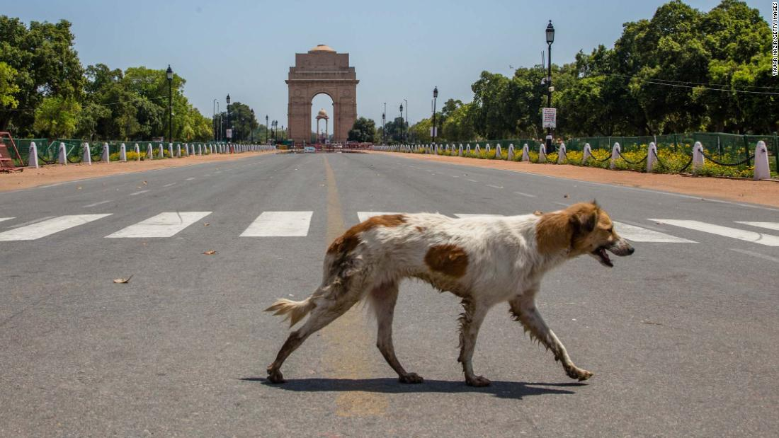NEW DELHI, INDIA - MARCH 30: A stray dog walks in front of an empty historic India Gate, as nationwide lockdown continues over the highly contagious coronavirus (COVID-19) on March 30, 2020 in New Delhi, India. The death toll in India due to coronavirus reached 29 as the total number of cases shot up to 1,071 on Monday, health ministry said, amid an unprecedented 21-day lockdown which has caused hardships to the countrys poor particularly migrant workers, thousands of whom have either been stuck in the national capital or were forced to cover hundreds of kilometer of distance back to their native villages.   (Photo by Yawar Nazir/Getty Images)