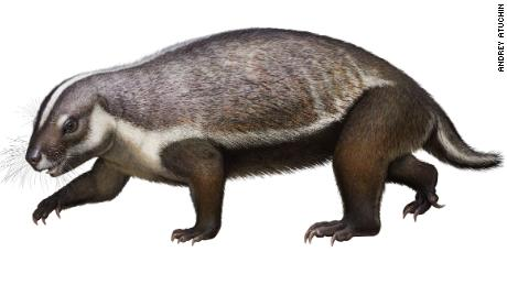 Adalatherium - Auchin reconstruction: Life-like reconstruction of Adalatherium hui, a new gondwanatherian mammal from the Late Cretaceous of Madagascar.