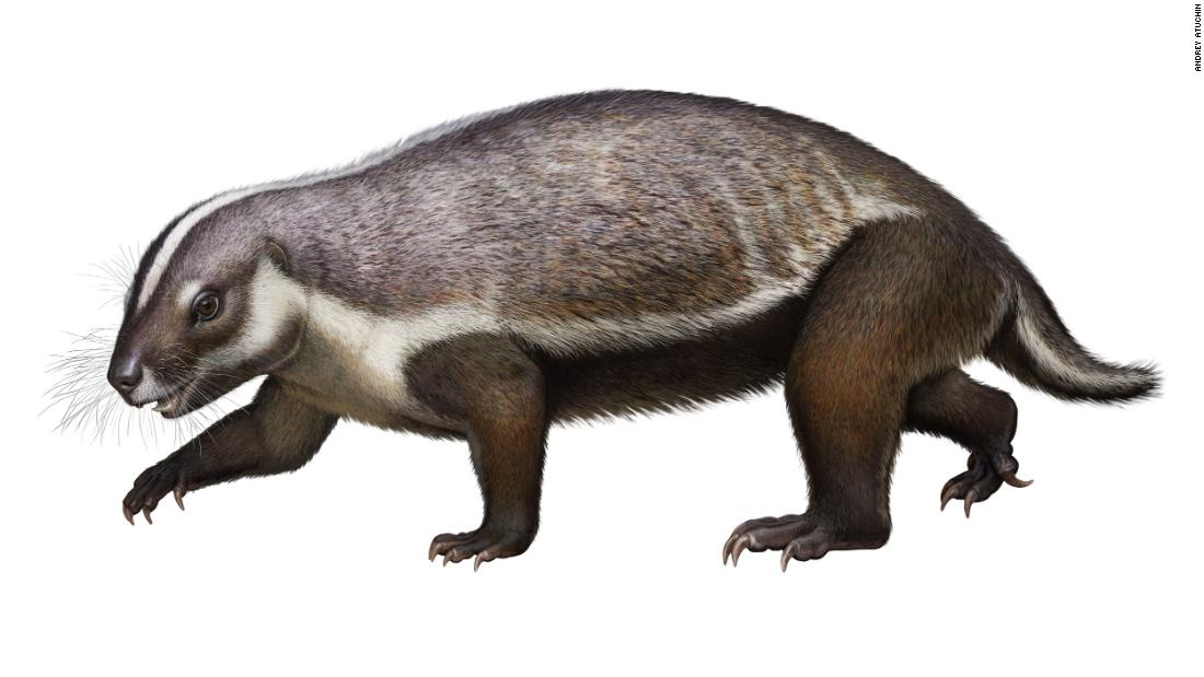 "<strong>Crazy beast: </strong>An artist's impression of Adalatherium, a bizarre mammal dubbed ""crazy beast"" and first described in 2020 is shown here. It would have lived among the dinosaurs and is unlike any other mammal -- extinct or living."