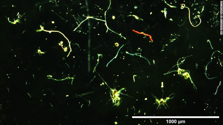 A collection of microfibers discovered by scientists.
