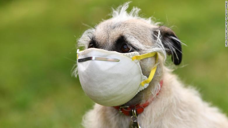 Grupos de defesa dos animais alertaram que não há benefício em colocar máscaras em animais de estimação.