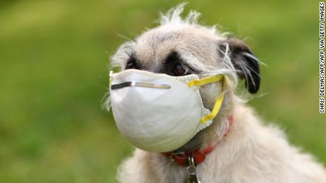 Animal rights groups have warned there is no benefit to fitting pets with masks.