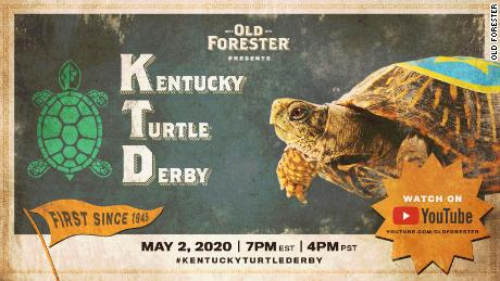 Eight turtles will compete in this year's Kentucky Turtle Derby.