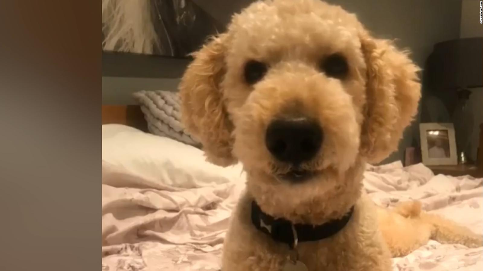 Watch Hilarious Talking Dog Meme About Quarantine Cnn Video