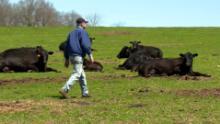 https://cdn.cnn.com/cnnnext/dam/assets/200504122636-terry-quam-marda-angus-farms-small-169.jpg