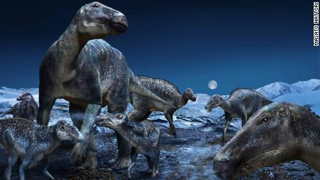 Arctic dinosaur may have crossed between Asia and America to dominate the north
