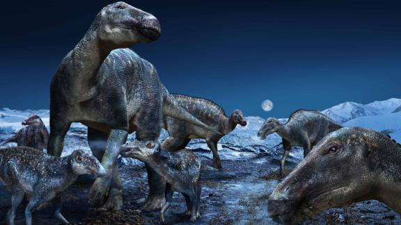 """Published in PLOS ONE today, a study by an international team from the Perot Museum of Nature and Science in Dallas and Hokkaido University in Japan further explores the proliferation of the most commonly occurring duck-billed dinosaur of the ancient Arctic as the genus Edmontosaurus. The findings reinforce that the hadrosaurs - dubbed """"caribou of the Cretaceous"""" - had a geographical distribution of approximately 60 degrees of latitude, spanning the North American West from Alaska to Colorado."""