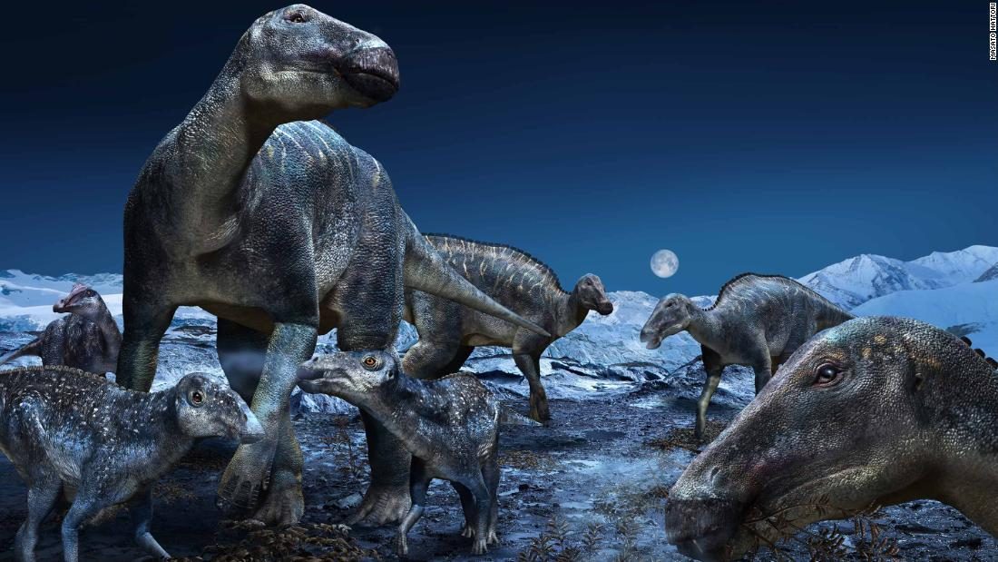 "Published in PLOS ONE today, a study by an international team from the Perot Museum of Nature and Science in Dallas and Hokkaido University in Japan further explores the proliferation of the most commonly occurring duck-billed dinosaur of the ancient Arctic as the genus Edmontosaurus. The findings reinforce that the hadrosaurs - dubbed ""caribou of the Cretaceous"" - had a geographical distribution of approximately 60 degrees of latitude, spanning the North American West from Alaska to Colorado."