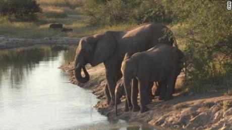 Un braconnier présumé piétiné à mort par des éléphants en Afrique du Sud