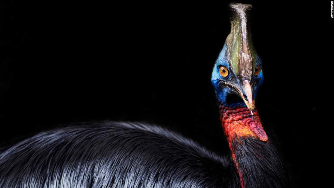 World's most dangerous bird raised by humans 18,000 years ago, study suggests