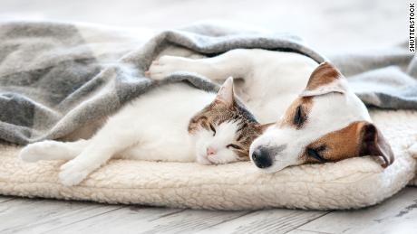 Make your rescue or foster animal a & # 39; forever & # 39; Friend