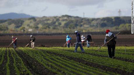 Migrant workers clean fields near Salinas, California, on March 30.