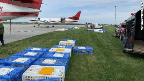 The rescued animals about to be loaded on planes.