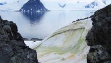 Snow is turning green in Antarctica and climate change will worsen the situation