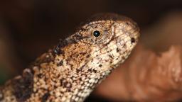 Human activity threatens billions of years of evolutionary history, researchers warn