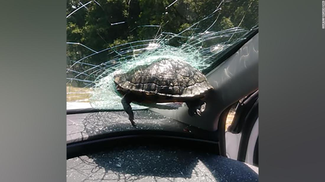 A turtle smashed through a woman's windshield while she was driving on the highway