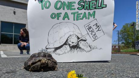 When Ms. Jennifer's owner died from Covid-19, the tortoise became a darling of news outlets and social media.