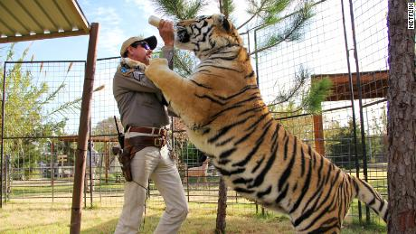 Tiger King Joe Exotic is said to have over 200 big cats in his Oklahoma zoo.
